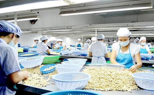 [Nổi Bật] Thị Trường Hạt Điều Việt Nam và Niềm tự hào nông sản Việt!